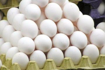 فروش تخممرغ، ارزانتر از نرخ مصوب
