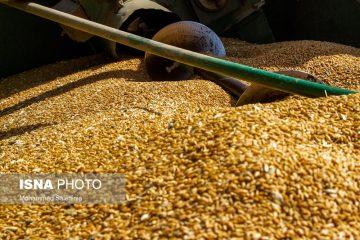 ضرورت تعیین تکلیف قیمت خرید تضمینی گندم توسط وزارت جهاد و کمیسیون کشاورزی